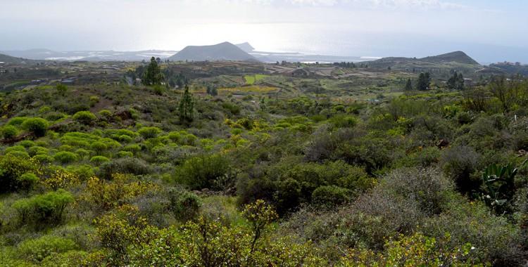 Grüne Landschaft Teneriffa