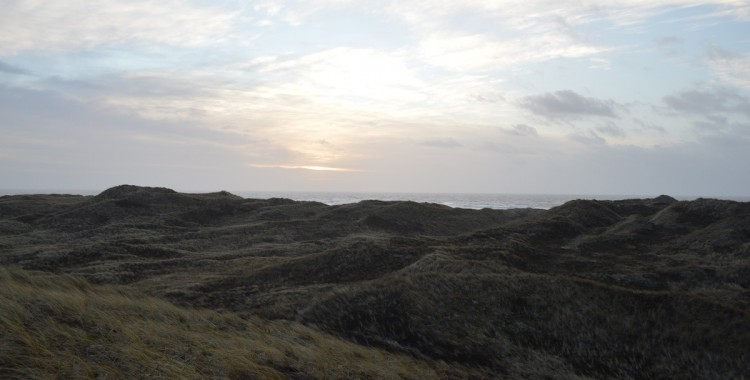 Typische Dünen Dänemark